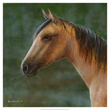 Mustang Prints by Kevin Daniel