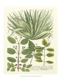 Weinmann Greenery IV Poster by Johann Wilhelm Weinmann