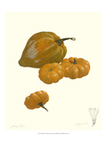 Squash Giclee Print by James Linton Sain