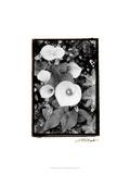 Floral Elegance II Print by Laura Denardo