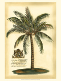 British Colonial Palm III Reprodukcje