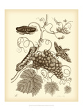 Nature Study in Sepia III Print by Maria Sibylla Merian