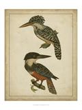 Vintage Kingfishers II Prints