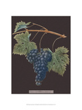 Purple Grapes Prints by George Brookshaw