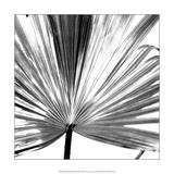 Black and White Palms III Plakater av Jason Johnson