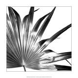 Black and White Palms I Plakater av Jason Johnson