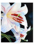 Summer&#39;s White Lily Giclee Print by Hanna Lore Koehler