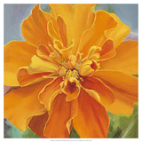 Just a Marigold Giclee Print by Bethany Winslow