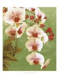 Non-embellished Island Orchid II Premium Giclee Print by Chariklia Zarris