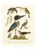 Antique Kingfisher I Posters by Alexander Wilson