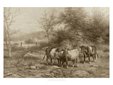 Grazing Cattle Giclee Print by George Riecke