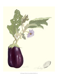 Aubergine Giclee Print by James Linton Sain
