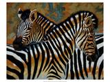 Zebras Premium Giclee Print by Robert Tate