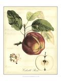 Printed Tuscan Fruits I Kunstdrucke von  Vision Studio