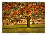 An Oak in the Cove Prints by Danny Head