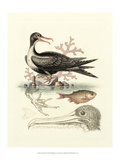 Aquatic Birds I Posters by George Edwards
