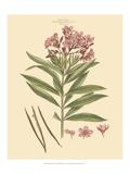 Blushing Pink Florals III Plakater af John Miller (Johann Sebastien Mueller)