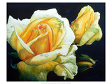 Summer&#39;s Yellow Rose Giclee Print by Hanna Lore Koehler