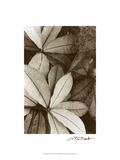 Garden Textures I Kunstdrucke von Laura Denardo