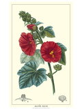 Non-embellished Crimson Bloom IV Premium Giclee Print by  Turpin