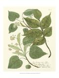 Weinmann Greenery III Prints by Johann Wilhelm Weinmann