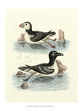 Aquatic Birds II Prints by George Edwards
