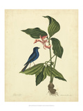 Catesby Bird & Botanical IV Poster von Mark Catesby