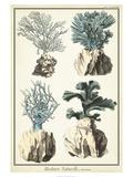 Oversize Coral Species III Prints