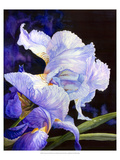 Summer&#39;s Iris Giclee Print by Hanna Lore Koehler