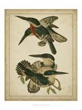Vintage Kingfishers IV Art