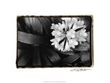 Floral Elegance IV Posters by Laura Denardo