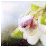 Apple Blossom II Prints