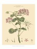 Blushing Pink Florals IV Plakater av  John Miller (Johann Sebastien Mueller)