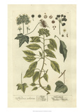 Non-Embellished Vintage Foliage II Print by  Blackwell