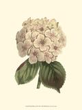 Pastel Blooms III Poster von Samuel Curtis