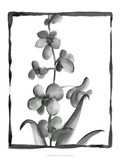 Non-embellished Sumi-e Floral II Prints by Ethan Harper