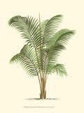 Coastal Palm II Affiches