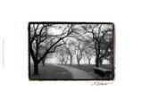 Morgenspaziergang im Nebel Poster von Laura Denardo