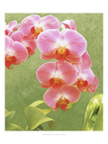 Non-embellished Island Orchid IV Giclee Print by Chariklia Zarris