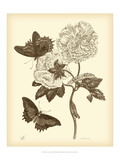 Nature Study in Sepia IV Posters af Maria Sibylla Merian