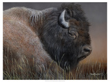 American Icon- Bison Poster by Kevin Daniel