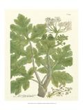 Weinmann Greenery I Kunst af Johann Wilhelm Weinmann