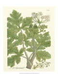 Weinmann Greenery I Art by Johann Wilhelm Weinmann