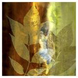 Lush Sunlight Giclee-tryk i høj kvalitet af John Butler