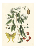 Butterfly and Botanical III Kunstdrucke von Mark Catesby