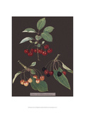 Cherries Print by George Brookshaw