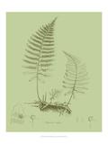 Fresh Ferns II Plakater af Samuel Curtis