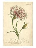 Non-Embellished Vintage Carnation Poster von  Vision Studio