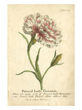 Non-Embellished Vintage Carnation Giclee Print by Vision Studio 