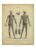 Anatomy Study II Prints by Jack Wilkes